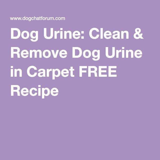 Dog Urine: Clean & Remove Dog Urine in Carpet FREE Recipe