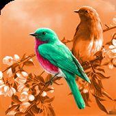Photo Color Changer