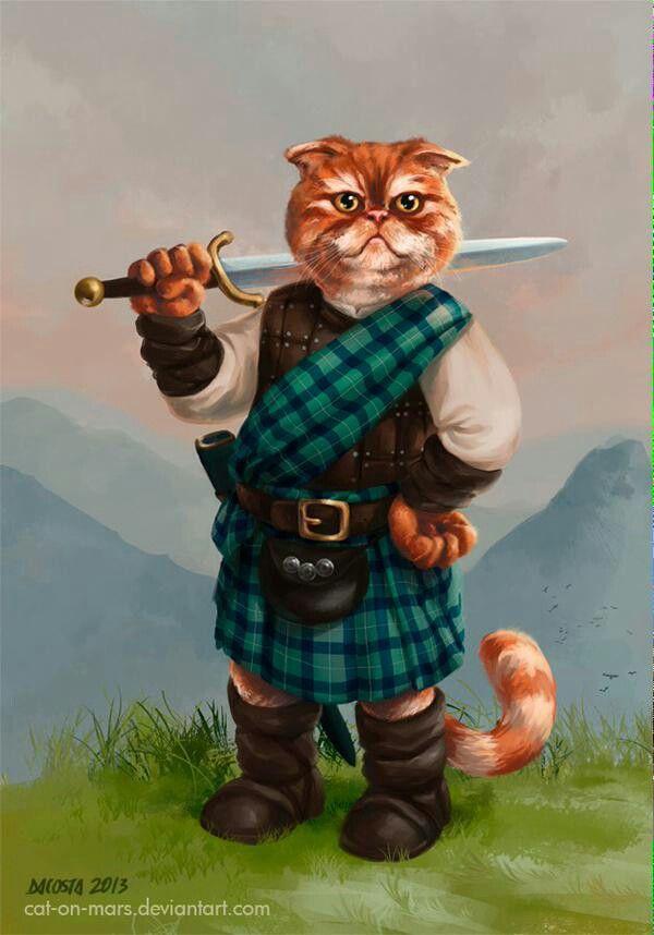 Шотландский кот)))