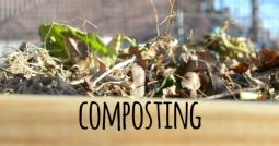Download a lesson plan (PDF) and watch a video about a basic how-to compost for your school or youth garden.