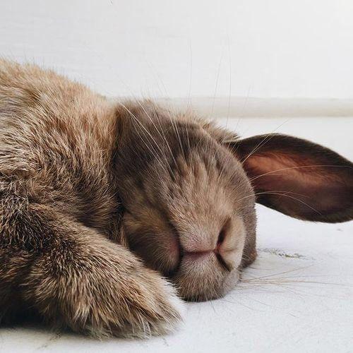 Nap time bunny