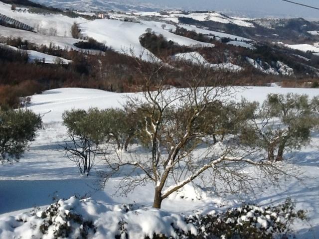 Winter 2012: the Big Storm