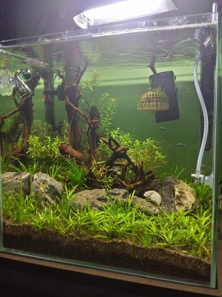 ... Acuarios on Pinterest Turtle tanks, Aquarium and Planted aquarium