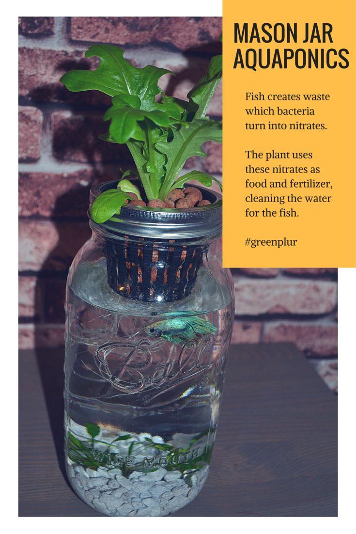 58 best Indoor Aquaponics images on Pinterest | Aquaponics ...