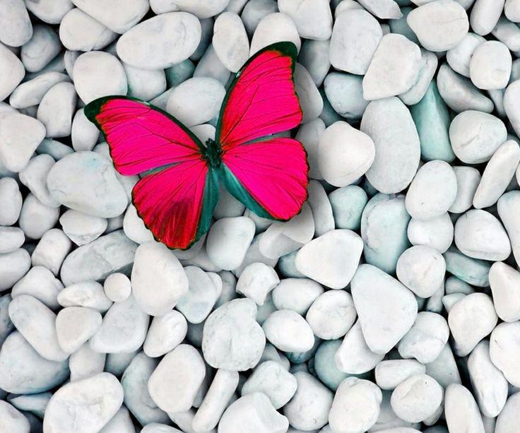 Fluture roz pe pietre albe