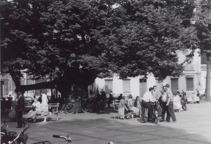 019 De lindeboom op de Heuvel in de zomer van 1958