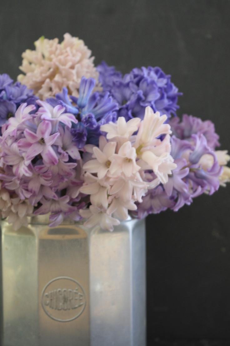 sweet Hyacinths