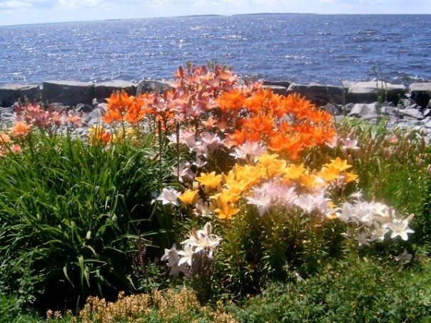 The gardens at the North Bay Waterfront are maintained by Volunteer Community Gardeners