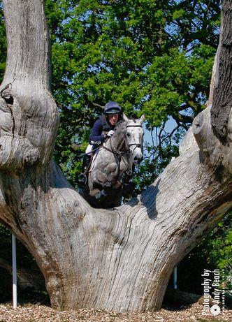tree horse jump