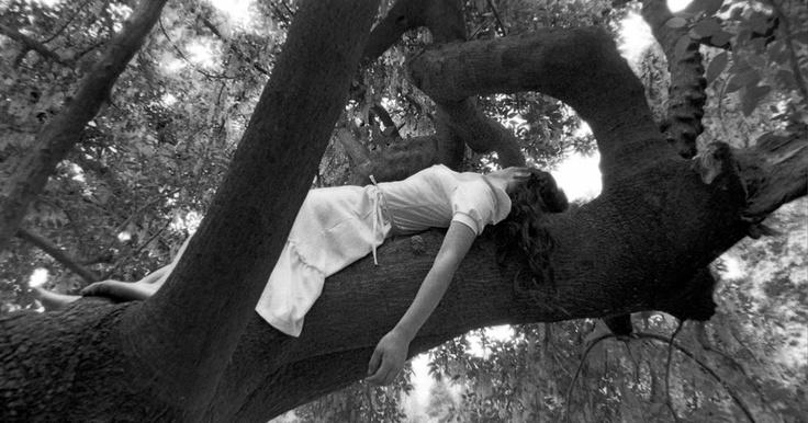 Durmiendo en la rama  (reedición 2011)