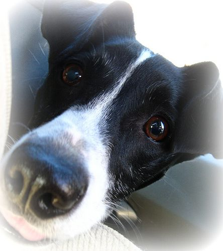 border collie jack russell terrier mix 25 best ideas about jack russell mix on pinterest jack 3893