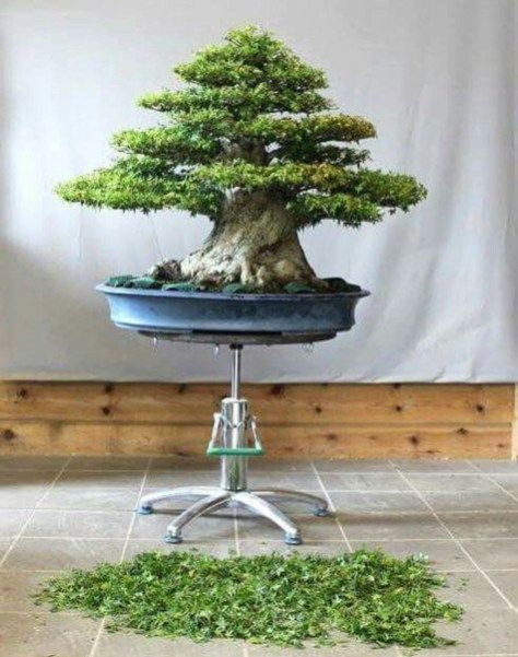 Very Attractive Bonsai Indoor Trees Ideas For Indoor Decorations 29