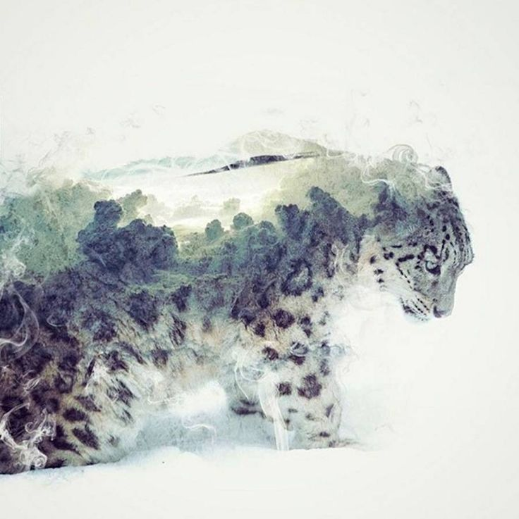 Smoky Double Exposure Animals Illustrations Snow Leopard Animal Illustration Double Exposure