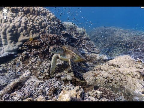 """Google takes you under the sea with its new """"street"""" view."""