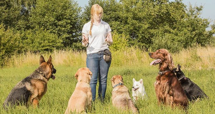 5 essential commands you can teach your dog: Sit, Come, Down, Stay, and Leave It