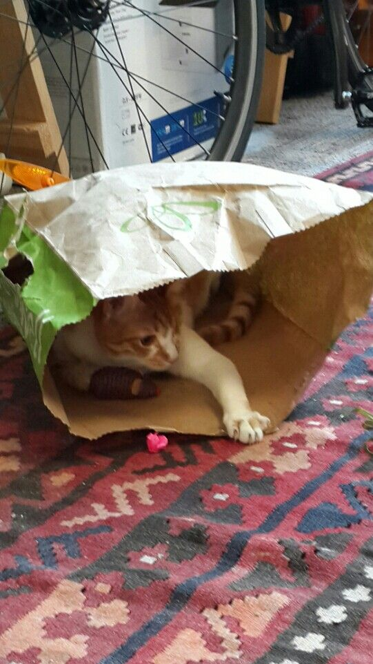 Never underestimate the fun value of a paper bag :-)