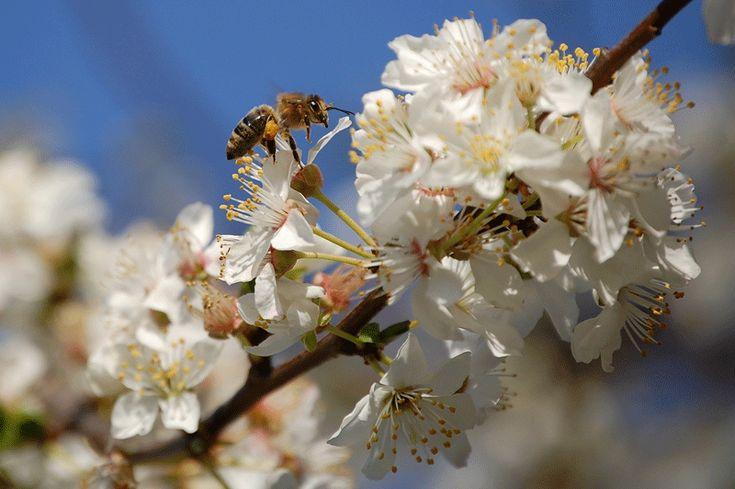 Treffpunkt Obstbaum