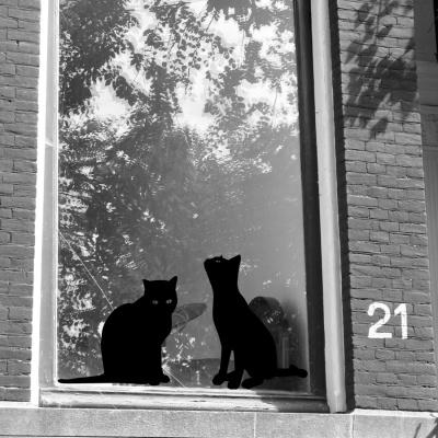 Gatos vinilos decorativos