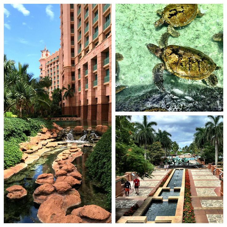 With thrilling water slides and activities galore, Atlantis is heaven for vacationing families. Read our family-friendly review of Atlantis Paradise Island
