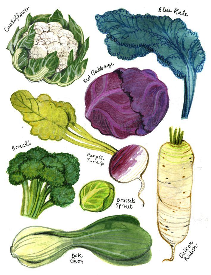 25+ bästa idéerna om Food illustrations på Pinterest