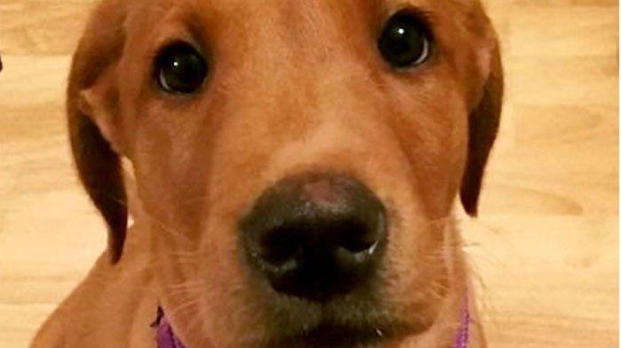 Anak Anjing Malang Ini Telan Sebuah Sendok berukuran 14 cm, Begini Kondisinya Sekarang