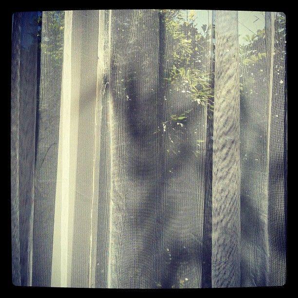 Stunning day bursting through the curtains — Taken on Jan. 1, 2012, 2:29 p.m. #MorningPics