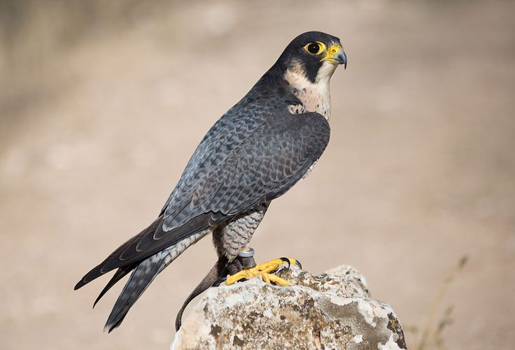 Avec plus de 570 espèces en son sein, la France est dotée d'une importante diversité d'oiseaux. Qu'ils soient petits, grands, colorés ou ternes, il y en a pour tous les goûts. Certaines espèces étonnantes sont évidemment plu...