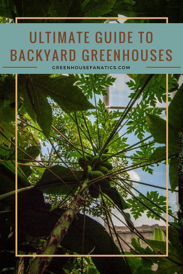 Types of Backyards Greenhouse Structures | Types Of Backyard Greenhouse (By Usage)| Materials Covering Your Greenhouse (Glazing) | Greenhouse Location Explained | Heating Your Backyard Greenhouses | The Basics Of Greenhouse Ventilation Systems | The Finer Points Of Greenhouse Climate Control | Attached vs. Freestanding Greenhouses (Pros & Cons) | What You Need for Greenhouse Supplies