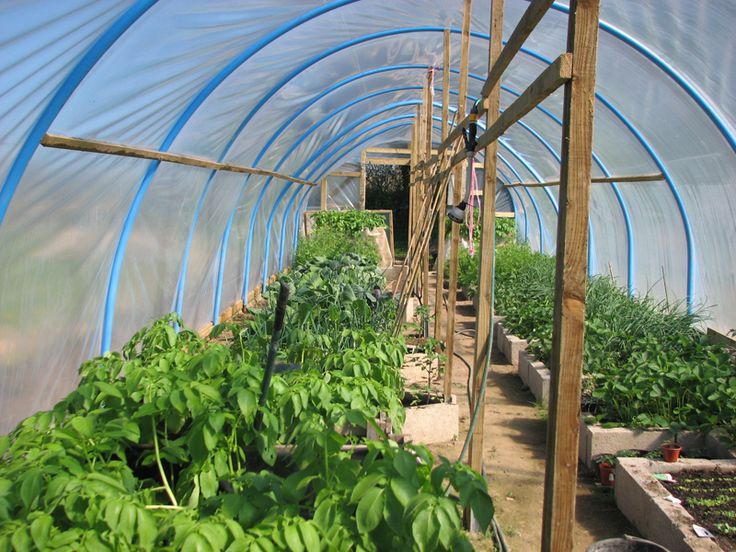 17 Best images about Poly Tunnel design on Pinterest ...