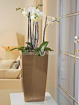 Natural orchids potted in Lechuza Cubico