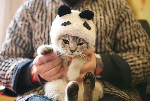 Cat in panda suit