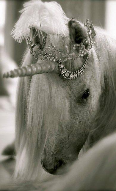 Unicorn Dream (by AdamASAV on Flickr)