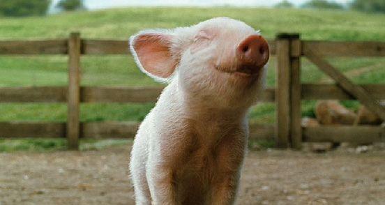 happy piglet!