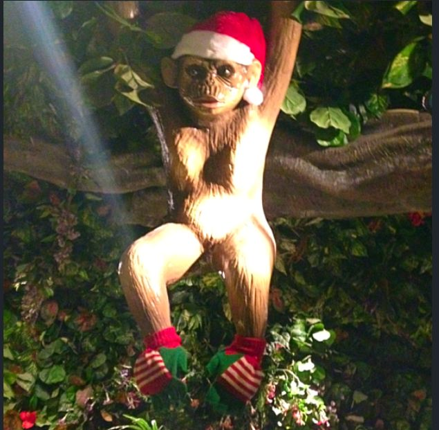 Our cheeky monkeys just hanging around... showing off their new Christmas outfits! http://www.therainforestcafe.co.uk/ at Christmas