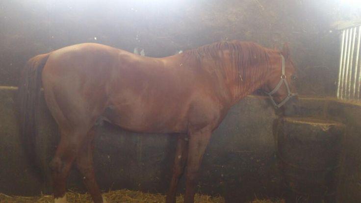 Sultansuyu At Çiftliği - Akçadağ, Malatya