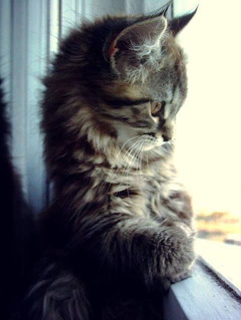 Kitty Sitting Pretty cute animals sweet cat pets kitten kitty pets,  I AM SO IN LOVE WITH THIS PIC