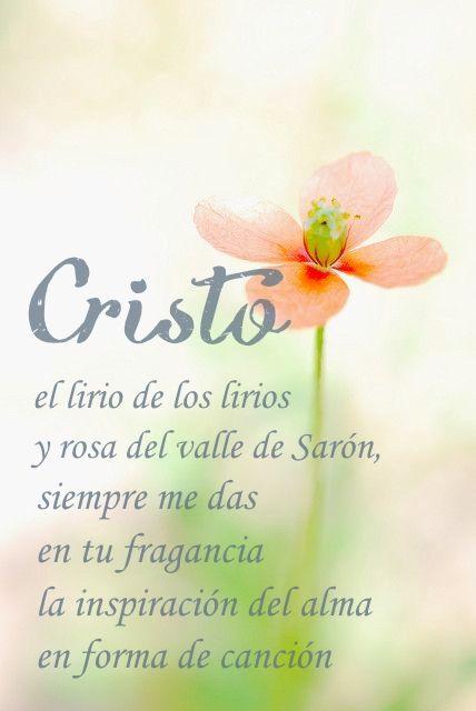 Cantares 2:1 Yo soy la rosa de Sarón, Y el lirio de los valles.♔
