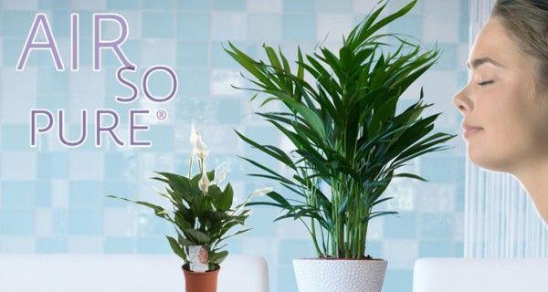 Air So Pure ®: klimaatverbetering binnenshuis | Tuinieren met Bakker
