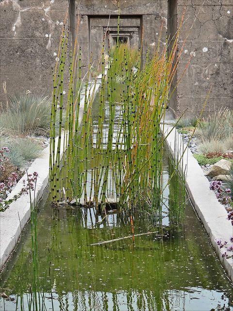 Le Jardin des Orpins et des Graminées (Estuaire, St-Nazaire) by dalbera, via Flickr