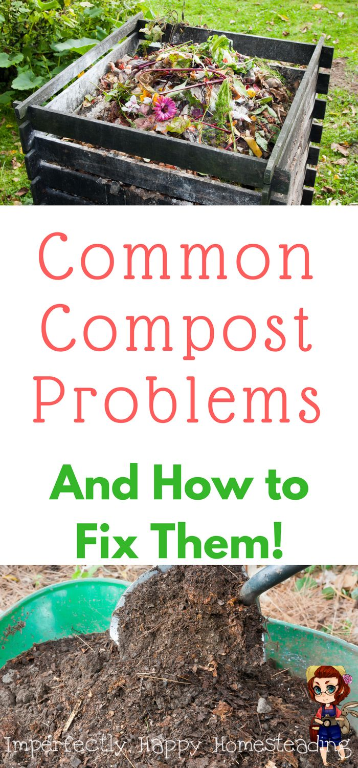 Common Compost Problems and How to Fix Them for a better garden.