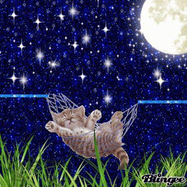 Cat in hammock under full moon and bright stars