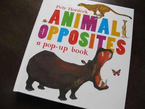 Animal Opposites aneb Petr Horáček zas jednou válí - Knihy dětem
