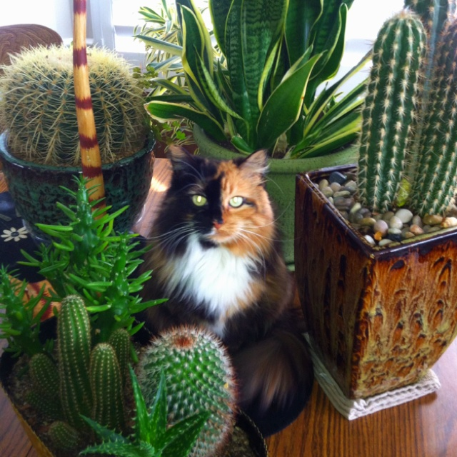 216 best Cats and cactus from the web... images on ...  216 best Cats a...