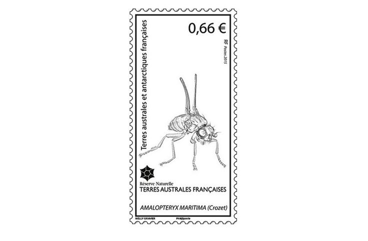 COLLECTORZPEDIA: TAAF Stamps Amalopteryx Maritima