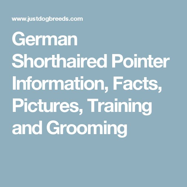 German Shorthaired Pointer Information, Facts, Pictures, Training and Grooming
