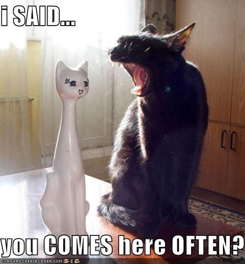 hahahahah!!Cat Quotes, Catlady, Funny Pictures, Funny Cat, Funny Stuff, Funny Animal, Black Cat, Cat Lady, White Cat