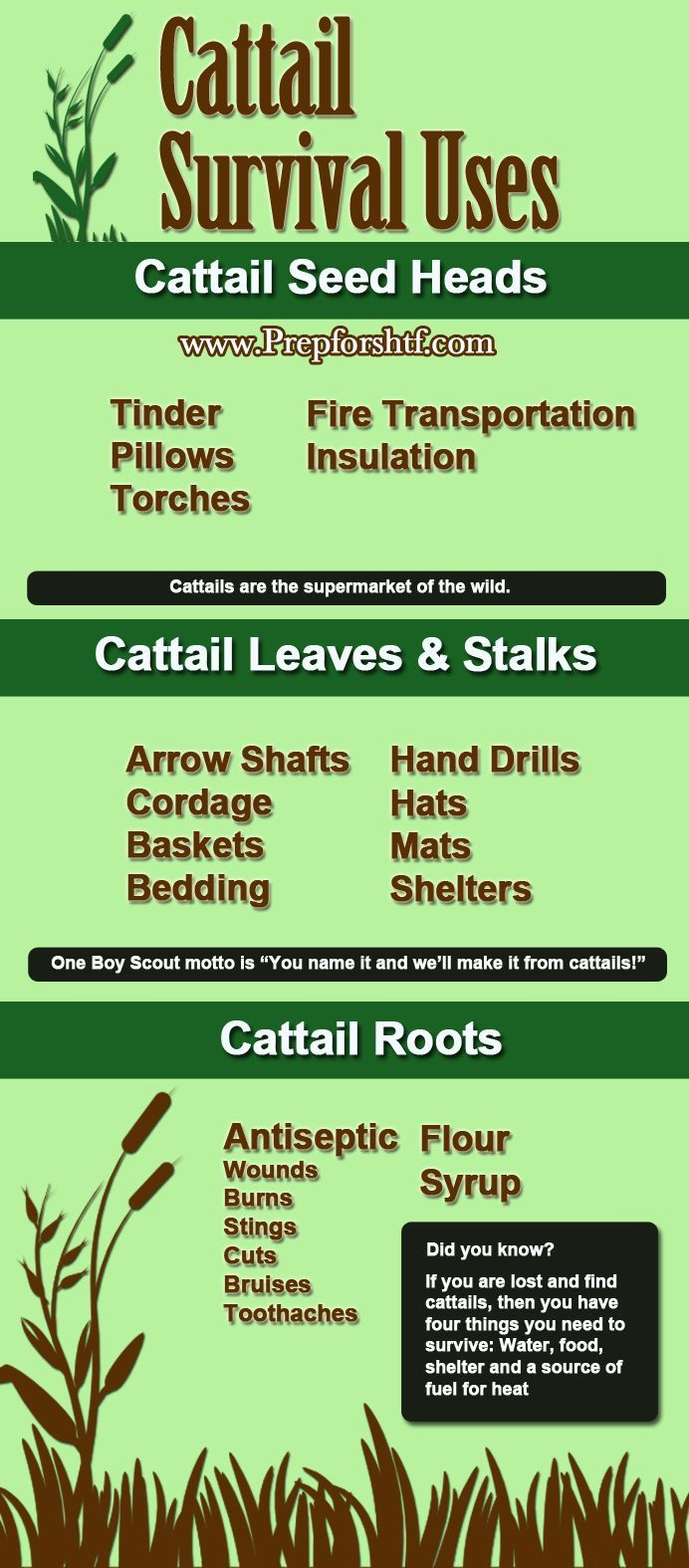 Cattail Survival Uses | Survival Prepping Ideas, Survival Gear, Skills & Emergency Preparedness Tips - Survival Life Blog: survivallife.com #survivallife