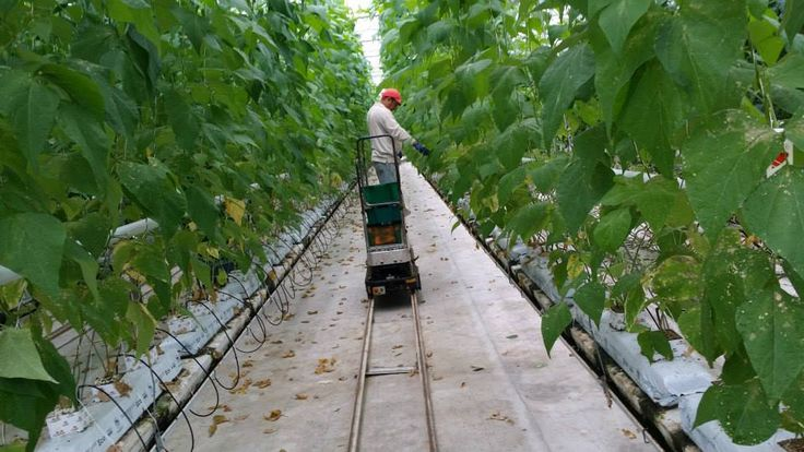 Visiting SunTech Greenhouses in Manotick, ON. #hydroponics #greenhouse