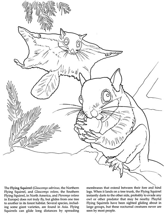 150 Best Images About Coloring Pages LineArt Animals