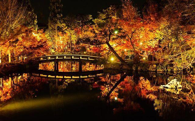 永観堂の紅葉ライトアップ Autumn leaves Illumination@Eikando temple. #永観堂 #京都 #紅葉 #ライトアップ #秋 #お寺 #eikando #kyoto #autumnleaves #illumination #temple #japan #東京カメラ部 #写真好きな人と繋がりたい #写真を撮ってる人と繋がりたい #ファインダー越しの私の世界  #photographylovers #team_jp_ #japan_art_photography #jp_views #igers #tokyocameraclub #photographylovers #japanigram #PHOS_JAPAN